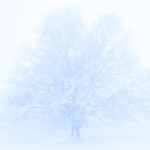 A Frozen Realm