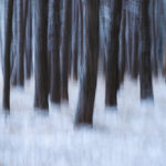 Frozen Pine Forest