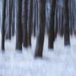 Frozen Pine Forest