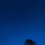 January Stars