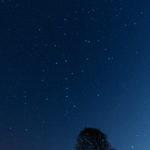 March Stars