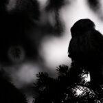 Night Owl IV