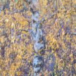 Under a Birch