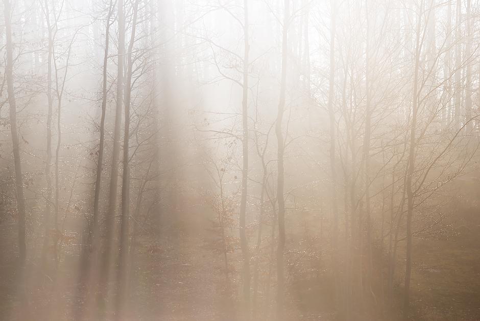 slide_1_alberi